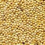 Animal Attractant: Millet (White Proso) - Wild Bird Seed & Feed