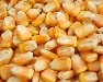 Whole Corn for Deer & Wildlife - Wild Bird Feed & Animal Attractant
