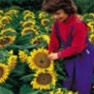 Bulk Sunflower Seed - Dwarf Sunspot - Flower Garden Seed