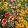 Bulk Wildflower Seed - All Perennial Mix - Flower Garden Seed