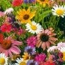 Bulk Wildflower Seed - Cutflower Mix - Flower Garden Seed