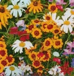 Wildflower Hummingbird/Butterfly Mix Flower Garden Seed in Bulk