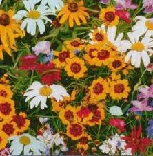 Wildflower Hummingbird & Butterfly Mix Flower Garden Seed in Bulk