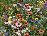 Bulk Wildflower Seed - Northeastern Mix - Flower Garden Seed