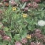 Bulk Wildflower Seed - Partial Shade Mix - Flower Garden Seed