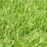 Premium Grass Seed - Annual Ryegrass for Shade or Sun