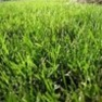 Contractor Grass Seed Mix - Quick Growing for Temporary Cover