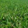 Premium Drought Resistant Grass Seed - Old English Playground Mix