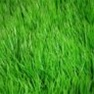 Grass Seed - Shady Mix Grass Seed Mix for Shady Areas