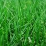Grass Seed - Sunny Mix Grass Seed Mix for Well-Lit Areas