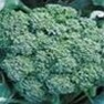 Bulk Non GMO Broccoli Seed - Green Sprouting Calabrese Vegetable Seed