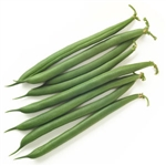 Bulk Non GMO Bean Seed - Jade Vegetable Seed