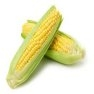 Bulk Non GMO Bodacious - Sweet Corn Vegetable Seed