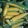 Bulk Non GMO Golden Bantam - Sweet Corn Vegetable Seed