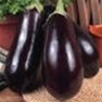 Buy Premium Quality Bulk Black Beauty - Egg Plant Seeds - Garden Seed