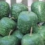 Buy Premium Quality Bulk Non GMO Apple - Gourd Vegetable Garden Seed