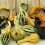 Bulk Non GMO Autumn Wings - Large - Gourd Vegetable Garden Seed