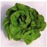 Bulk Non GMO Butter Crunch - Lettuce Vegetable Garden Seed
