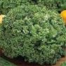 Bulk Non GMO Grand Rapids - Lettuce Vegetable Garden Seed