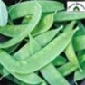 Bulk Non GMO Oregon Sugar Pod II (Giant) - Pea Vegetable Garden Seed