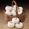 Bulk Non GMO Baby Boo - Pumpkin Vegetable Garden Seed