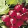 Bulk Non GMO Cherry Belle - Radish Vegetable Garden Seed