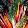 Bulk Non GMO Rainbow - Swiss Chard Vegetable Garden Seed