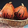 Buy Premium Quality Bulk Non GMO Lakota- Squash Vegetable Garden Seed