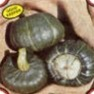 Bulk Non GMO Buttercup - Squash Vegetable Garden Seed