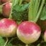 Bulk Non GMO Purple Top - Turnip Vegetable Garden Seed