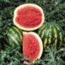 Bulk Non GMO Crimson Sweet - Watermelon Vegetable Garden Seed